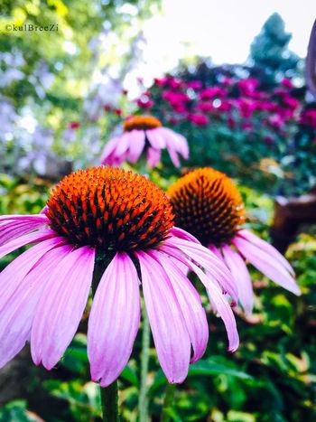 3rd Degree My Love Life Summer2015 Garden Series Flowerpower StreamzooVille