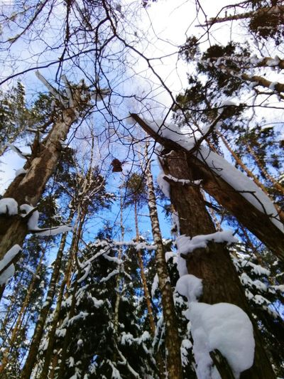 Tree Branch Snow Winter Cold Temperature Forest Sky
