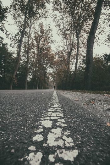 Tree Plant Direction The Way Forward Nature Road Day Transportation Diminishing Perspective One Person Real People Outdoors Road Marking Growth Marking Tranquility Surface Level Sign Land vanishing point Change #asphalt #linda