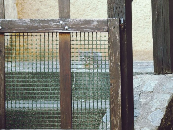 Cat Hiding Taking Photos Hi! Animals Cute Do You See What I See? Transparency Taking Photos