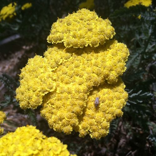 Yellow Flower Taking Photos Volunteering A Bugs Life