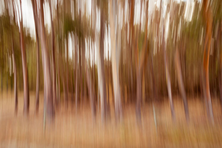Tree Trunks Trees WoodLand Abstract Backgrounds Blurred Motion Day Forest Full Frame Impressionism Impressionist Nature No People Outdoors