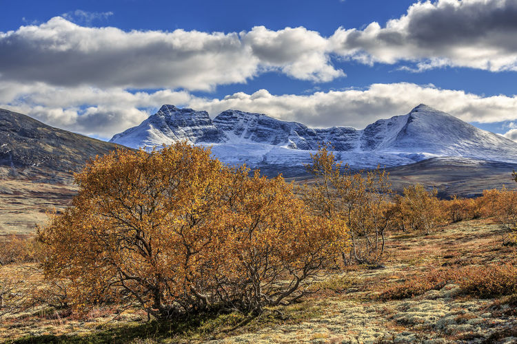 Norway is incredibly beautiful. Autumn colors together with snowcapped mountains of Dörålsdalen. Mountain Sky Beauty In Nature Cloud - Sky Plant Scenics - Nature Tranquil Scene Tranquility Tree Nature Environment Landscape No People Snow Day Cold Temperature Winter Non-urban Scene Mountain Range Snowcapped Mountain Outdoors Mountain Peak Autumn Norway Fall