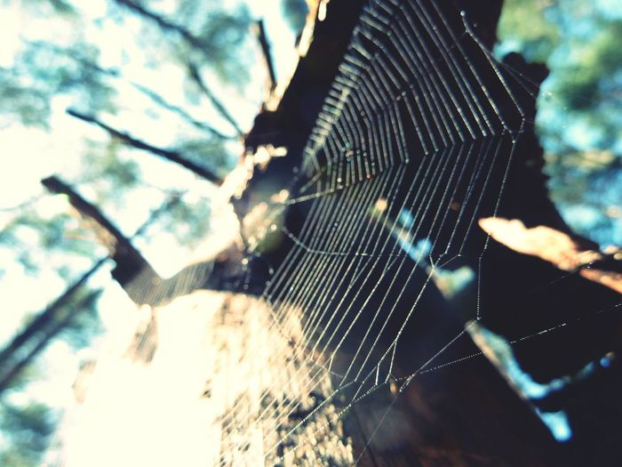 Tree Focus On Foreground Low Angle View Branch Nature Spider Web Close-up Outdoors Day Beauty In Nature