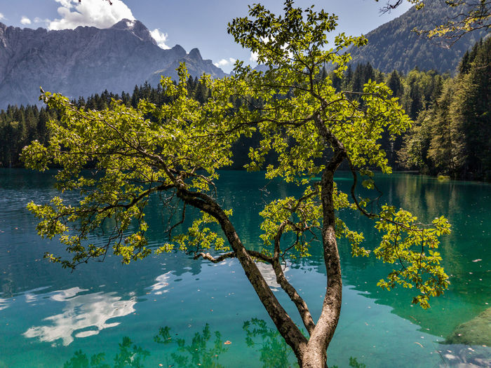 Scenic View Of Tree By Fusine Lake Against Mountains