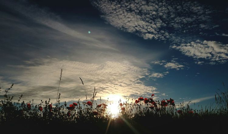 """Good morning"" Poppies ... Morning Sunrise Flowers Clouds маки утро рассвет облака"