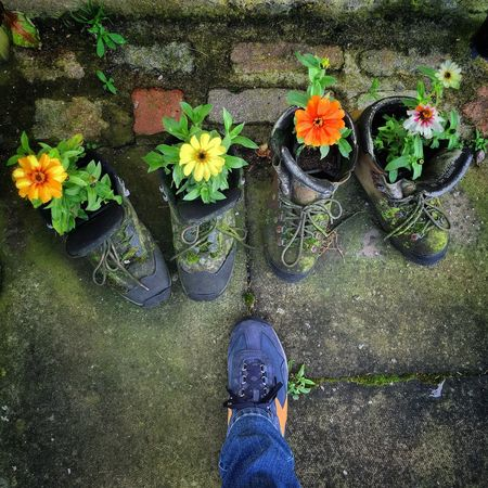 shoes in bloom Flower Freshness Plant Jeans Petal Nature Low Section Shoe Person Fragility Standing Growth Day Rubber Boot Beauty In Nature Flower Head Outdoors Springtime Blossom Shoes