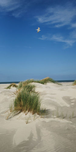 Seagull fly over the Beach Sea Beach Water Nature Flying Sky Landscape Day Marram Grass Outdoors Tranquility Sand Seagull Plant Land Environment Beauty In Nature No People Sand Dune Tranquil Scene Non-urban Scene Scenics - Nature Möwe Nordsee Urlaub