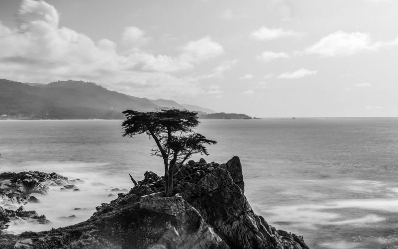California Lone Cypress Carmel California Carmel-by-the-sea Landscape Blackandwhite Pacific Ocean Pacific Ocean Sky Highway1 Water Sea Sky Beauty In Nature Scenics - Nature Tranquility Rock Cloud - Sky Tranquil Scene Nature Rock - Object Tree No People Day Solid Beach Outdoors Mountain Horizon Horizon Over Water