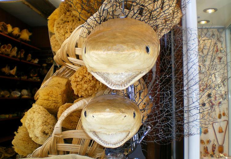 Close-up Market Outdoors Sark Shark Head