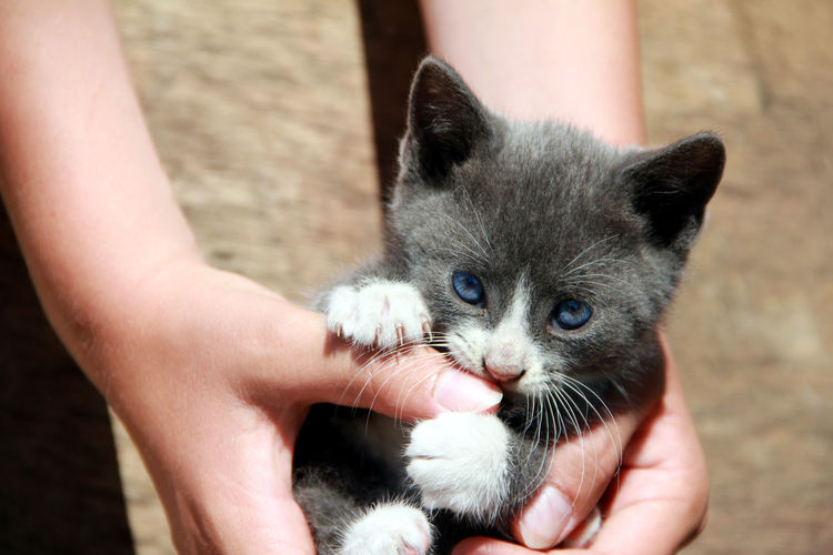 Cute Cat Body Part Care Cat Domestic Domestic Animals Domestic Cat Finger Hand Holding Human Body Part Human Hand Kitten Mammal One Animal People Pet Owner Pets Real People Unrecognizable Person Vertebrate Whisker Young Animal