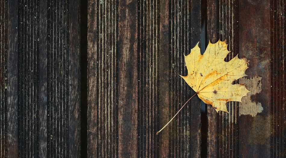 Leaf Print Nature_collection Nature Wood Color Photography Lines Leaf Composition Colors