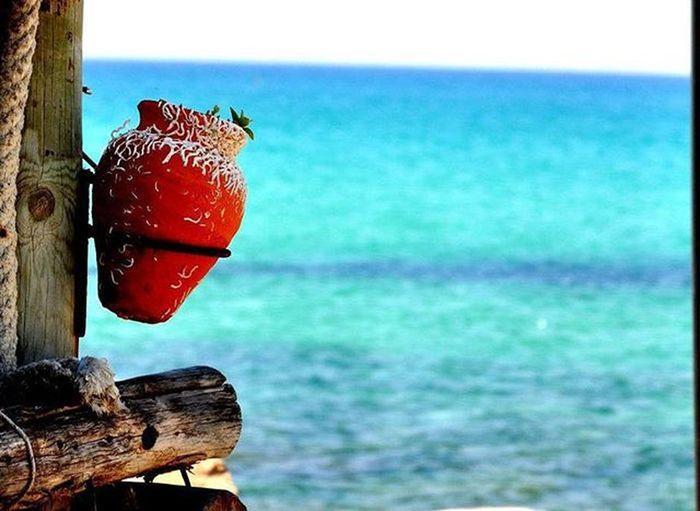 Memories Tunisia Vacation Sea Nature Türkìz Amfora