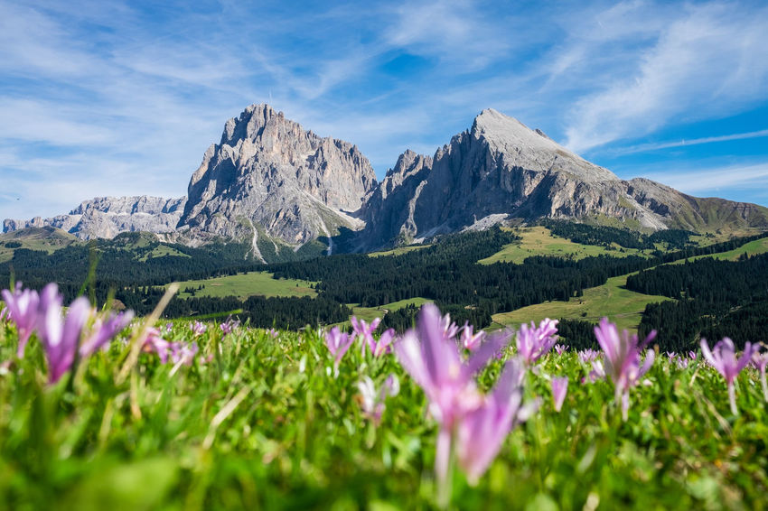 Meadow Meadow Flowers Beauty In Nature Cloud - Sky Day Environment Flower Flowering Plant Formation Freshness Growth Land Landscape Meadow Mountain Mountain Peak Mountain Range Nature No People Outdoors Plant Scenics - Nature Sky Tranquil Scene Tranquility
