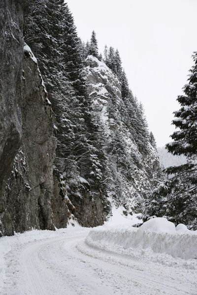 Rock Rock Formation Snow Road Snow Covered Snow Covered Trees Snowy Road Tree Snow Cold Temperature Winter Mountain Forest Sky Pine Woodland WoodLand Pinaceae Snowcapped Mountain Evergreen Tree Eastern Europe Tree Area