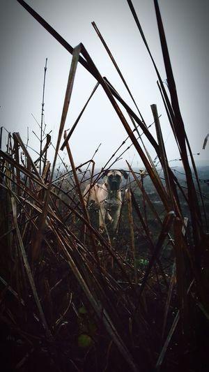 Canecorsolovers Chicago ♥ Dog❤ Canecorso  Canecorsoitaliano Chicagone I Love My Dog Mydog♡ Dogs Of EyeEm Natura Beautiful Nature