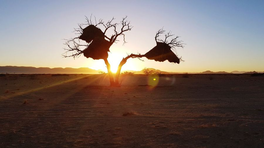 Tree Morning Light Sunrise Silhouette Sunsrise Moning Coffee☕🍵 Sunset Elephant African Elephant Silhouette Togetherness Sunlight Clear Sky Sky Desert Namib Desert