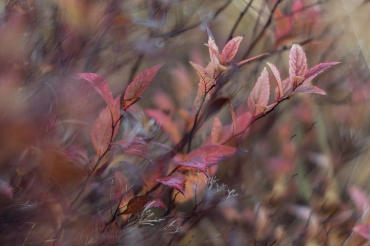 Close-up of pink flowering plant during autumn