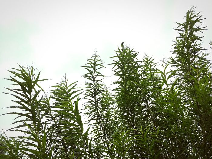 Low angle view of plants against sky