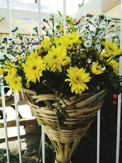 Flower Yellow Nature Growth No People Close-up Beauty In Nature Outdoors Freshness Day Light White decorative arts yellow