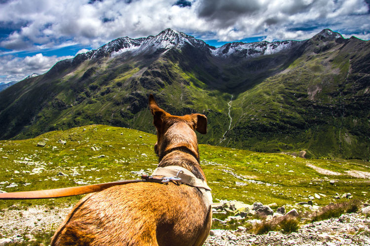 Horse standing on field by mountains against sky