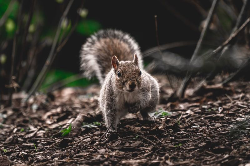 Ground Park Adorable Spring Summer Mammal Wildlife & Nature Sweet Outdoors One Animal Mammal Animal Wildlife Animals In The Wild No People Rodent Nature Land Vertebrate Squirrel Close-up Looking At Camera Alertness Full Length Day Portrait