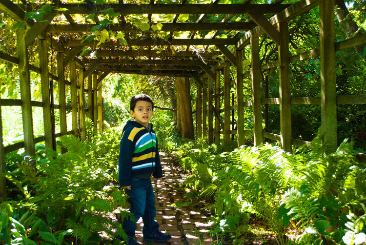 Portrait of boy standing amidst plants in covered walkway