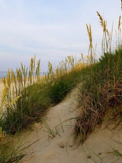 Nature Outdoors No People Grass Sky Day Growth Beauty In Nature Water Ocean Sunset Sand Dune Sand Beach Landscape Close-up Beach Life Beach Photography Grassy
