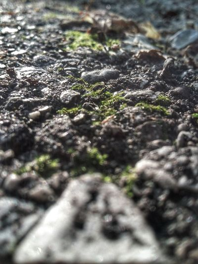 Zen Moss Plants 🌱 Outside Macro Focus Moss Mossporn Mossandlichen Asphalt Asphaltography Natural And Artificial Prominent Focus Feel The Journey