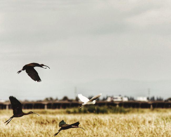 Seagulls flying over grass against sky