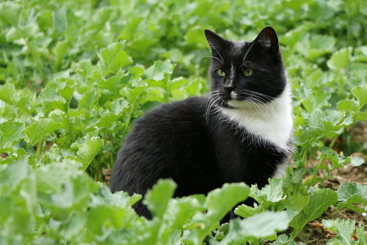 Something is there... Field Green Color Hunter Animal Themes Black And White Day Domestic Animals Domestic Cat Feline Garden Green Eyes Leaves Mammal Nature No People One Animal Pets Plant Watcher Watching