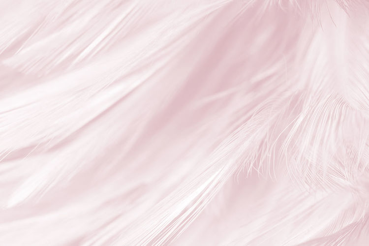 Backgrounds Full Frame Pink Color No People Softness Close-up Textured  White Color Textile Indoors  Pattern Feather  Abstract Nature Still Life Extreme Close-up Elégance Vulnerability  Macro Fragility Purple Luxury Textured Effect Flower