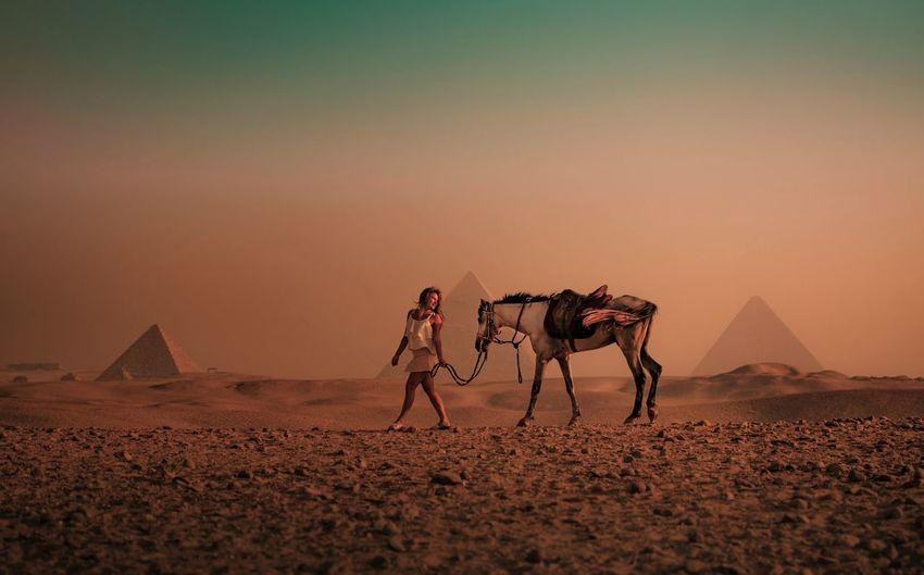 Full length of woman with horse walking on desert during sunset