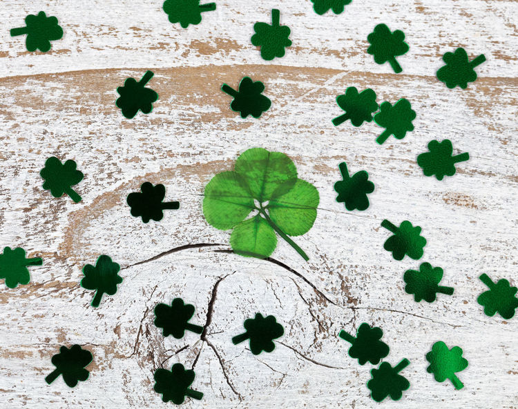 Real four leaf clover with shiny clovers on rustic wooden boards in overhead view Clover Green Color Holiday Luck St Patrick's Day Four Leaf Clover High Angle View Irish Plant St Patrick