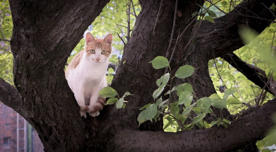 Tree cat Cat Cute Kitty Cat Trunk Tree Trunk Tree Plant Nature Growth Day No People Close-up High Angle View Plant Part Textured  Beauty In Nature Sunlight Land Animal Flowering Plant Outdoors Green Color Leaf
