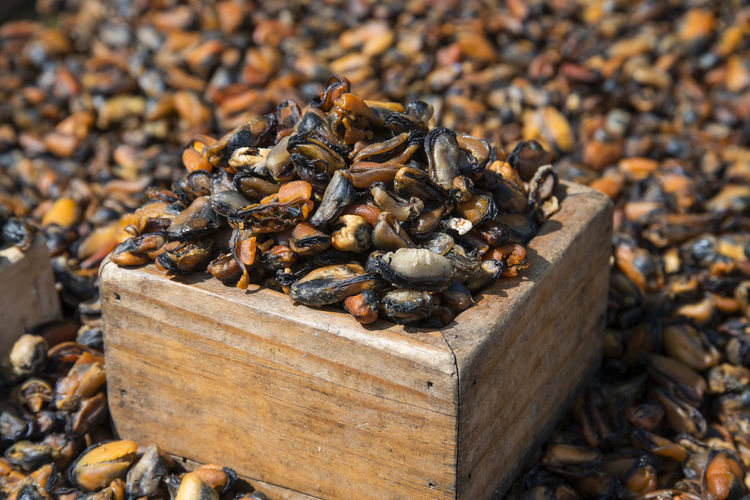 Mussel In Wooden Box