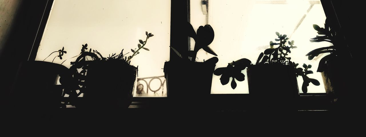 Foryou Window View Life Day No People Jalisco Guadalajara Plants 🌱 Plants Silhouette Real People Men Plant Lifestyles Nature Day Window Representation