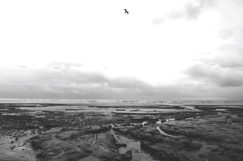 Calm Flying Sky Water Bird Scenics Tranquil Scene No People Emotional Photography Black And White Ukseaside Bleak Grey Grey Sky Rock Pools Sea Outdoors Space For Copy Sussex Coast Britain EyeEm Best Shots EyeEm Gallery Coast EyeEm Nature Lover