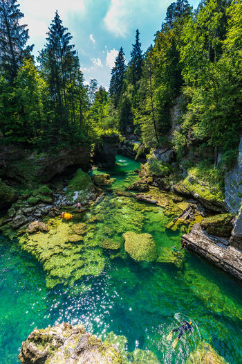 Traunfall Beauty In Nature Day Flowing Flowing Water Forest Green Color Growth Nature No People Non-urban Scene Oberösterreich Outdoors Plant River Rock Rock - Object Scenics - Nature Solid Stream - Flowing Water Tranquil Scene Tranquility Tree Upperaustria Water
