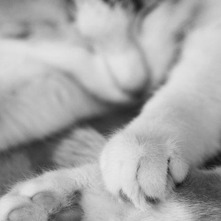 Cat Cats Sleeping Beautiful Blackandwhite