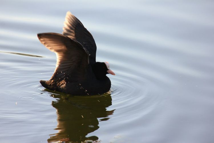 Close-up side view of a bird in water