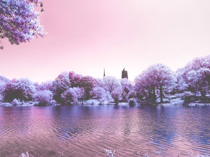 View of pink flower trees by lake against sky
