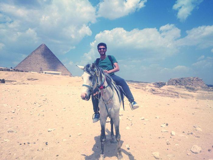Horse Sahara Giza Pyramids Egypt Cairo Happiness