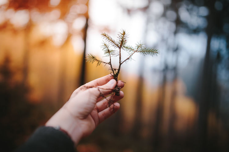 Baby Tree Beauty In Nature Bokeh Close-up Confidence  Day Focus On Foreground Forest Fragility Future Holding Hope Human Body Part Human Hand Lifestyles Mini Nature Nature One Person Outdoors Real People Seed Tiny Tree Tree Woods