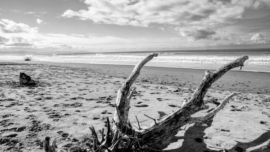 Driftwood on beach against sky