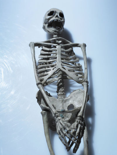 Image of human skeleton Body & Fitness Science Skeleton Anatomy Artificial Biology Health Medical No People Object Party Skeletal Skull