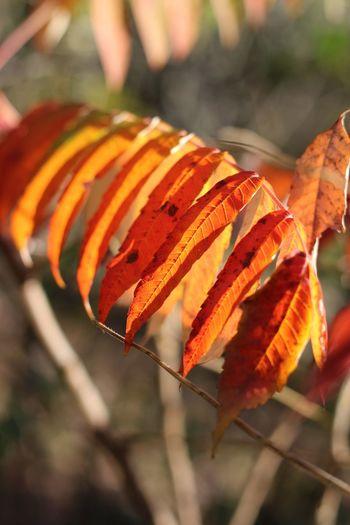 Close-up of orange leaves on plant