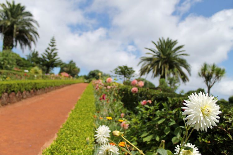Coastal view in Azores, Portugal Azores Portugal Beauty In Nature Blooming Day Flower Flower Head Fragility Freshness Growth Nature No People Outdoors Plant Sky Tree