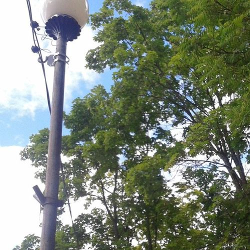 Прост )0) No_effect Nature Tree green blue Lantern