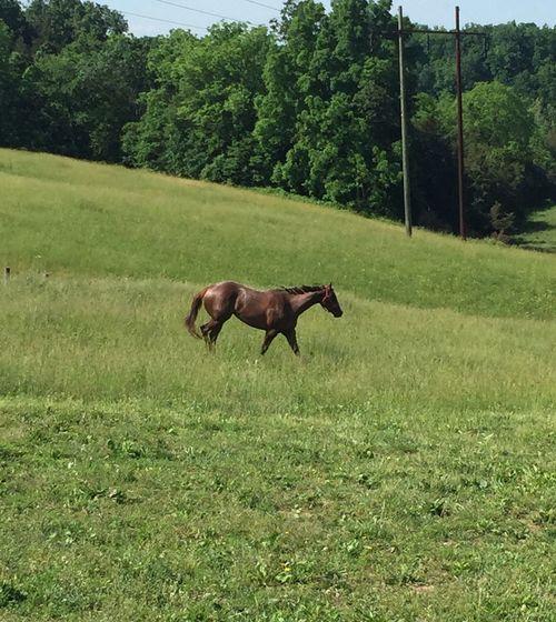 Horse Pasture, Paddock, Grassland, Pastureland Horse Photography  Exploring New Ground Woods
